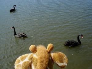 Negative swans